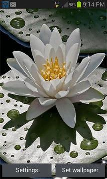 Beautiful Lotus Live Wallpaper poster