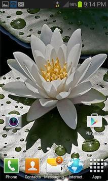 Beautiful Lotus Live Wallpaper apk screenshot