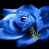 Blue Butterfly Rose LWP icon