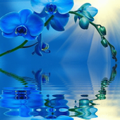 Blue Orchid Live Wallpaper icon
