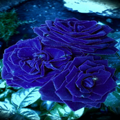 Blue Roses Live Wallpaper icon