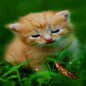 Cute Cat Butterfly LWP icon