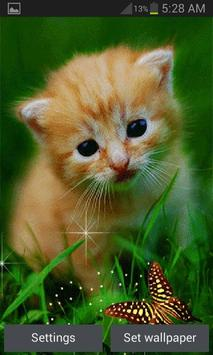 Cute Cat Butterfly LWP poster