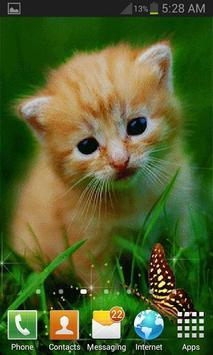 Cute Cat Butterfly LWP screenshot 1
