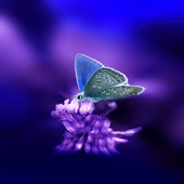 Cute Butterfly Live Wallpaper icon