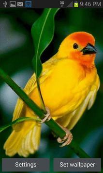 Cute Yellow Bird LWP poster
