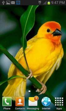 Cute Yellow Bird LWP apk screenshot