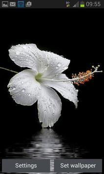 Dewy White Flower LWP poster
