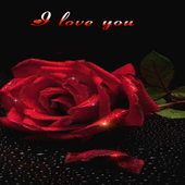 Lovely Red Rose LWP icon