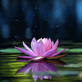 Magical Lotus Live Wallpaper icon