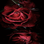 Magical Roses Live Wallpaper icon