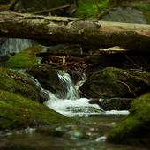 Nature Water Scene LWP icon