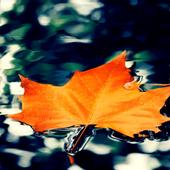 Orange Leaf Live Wallpaper icon