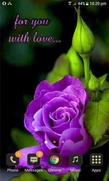Purple Lovely Rose LWP apk screenshot