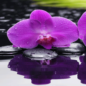 Purple Orchid Live Wallpaper icon