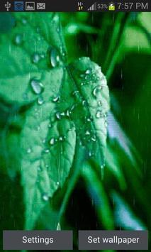 Rainy Leaf Live Wallpaper apk screenshot