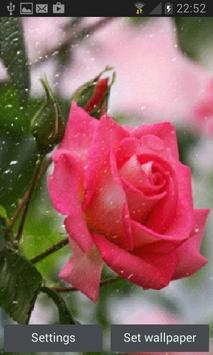 Rainy Pink Rose LWP poster