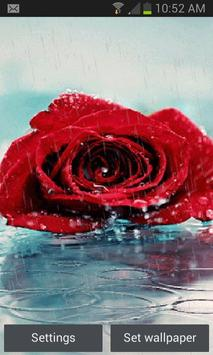 Rainy Red Rose LWP poster