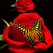 Red Roses Butterfly LWP icon