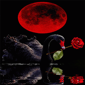 Red Rose Swan LWP icon