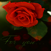 Rose For You LWP icon