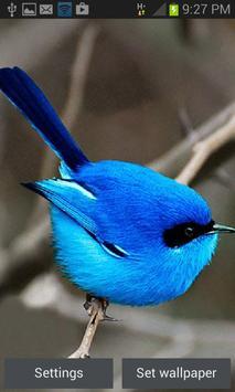 Small Blue Bird LWP poster
