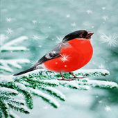 Snowy Red Bird LWP icon