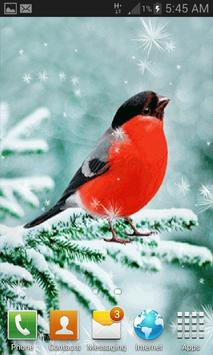 Snowy Red Bird LWP apk screenshot