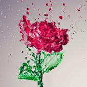 Splash Red Rose LWP icon