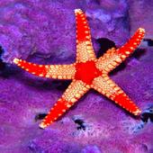 Star Light Fish LWP icon
