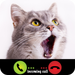 Fake Call From Kitty Cat
