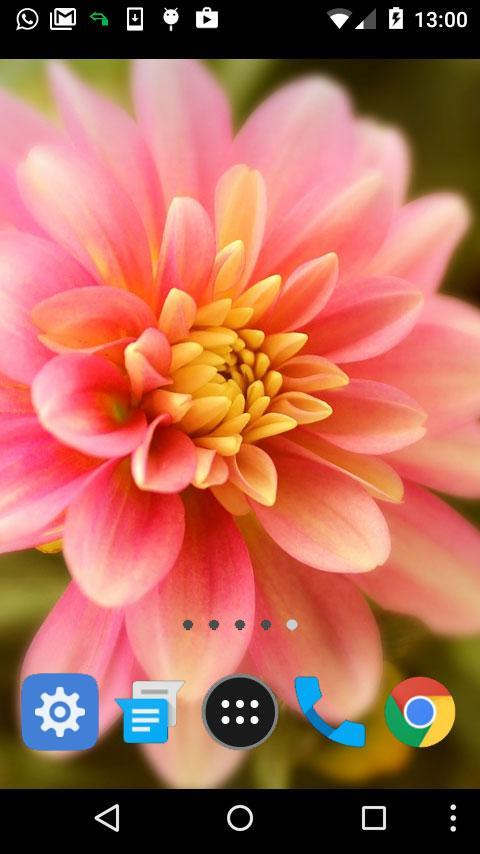 Lwp Dahlia For Android Apk Download