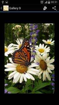 Daisy Flower screenshot 4