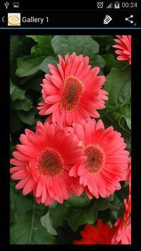 Daisy Flower screenshot 10