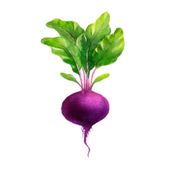 Daily Food Co icon