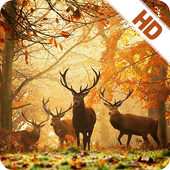 Autumn Wallpapers HD 2017 icon