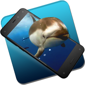 Beautiful Dolphins Live WP icon
