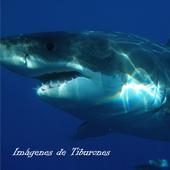 Imagenes de Tiburones icon