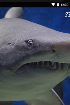 Imagenes de Tiburones apk screenshot