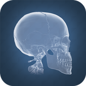 Anatomy 4D icon