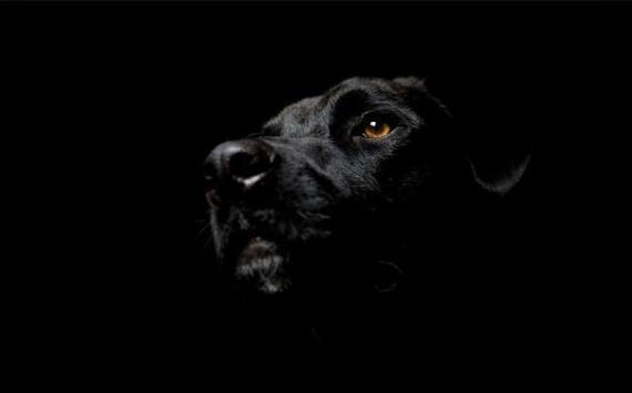hewan gelap wallpaper screenshot 3