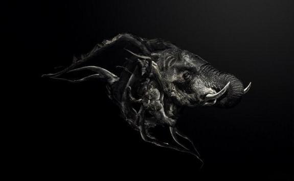 hewan gelap wallpaper poster
