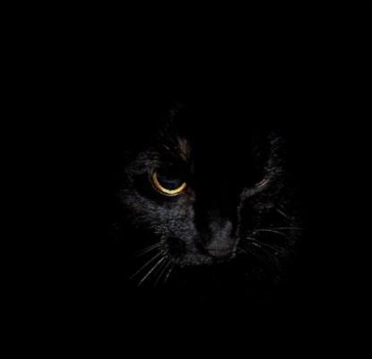 Wallpaper Dark Animal For Android Apk Download