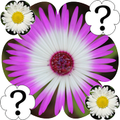 Flowers Memory Game icon