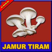 Rahasia Sukses Budidaya Jamur Tiram icon