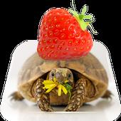 Tortoise And Tiny Panc Live WP icon