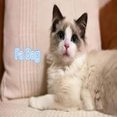 Fa Bag icon