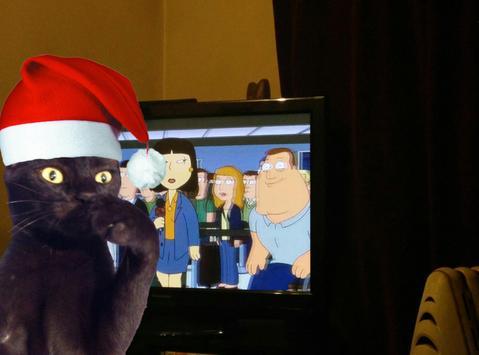 Cat Bomb Camera apk screenshot