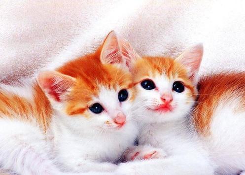 B.O.B.O. - Cute Little Cats apk screenshot
