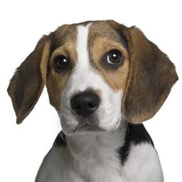 Beagle screenshot 3